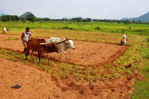 Agro Horti Culture
